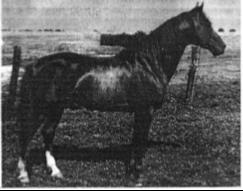 Cotham Dare   1941-1955