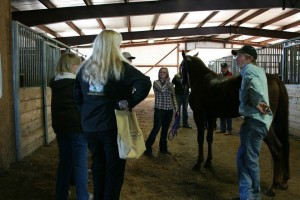 MFT Stallion Tour attendees ask stallion owners questions and interact with the stallions.  Photo by Josephine Styron