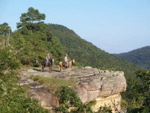 No matter where you ride, Top Trail and the MFTHBA will reward you for the hours and miles spent riding your Missouri Fox Trotting Horse.